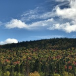 Trees changing in the Charlevoix Region